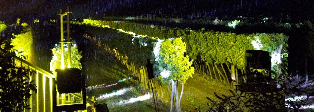 der Weingarten am Abend